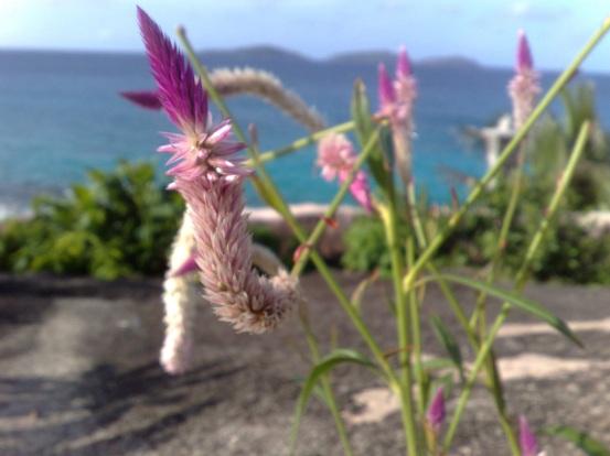 Seychellen - La Digue